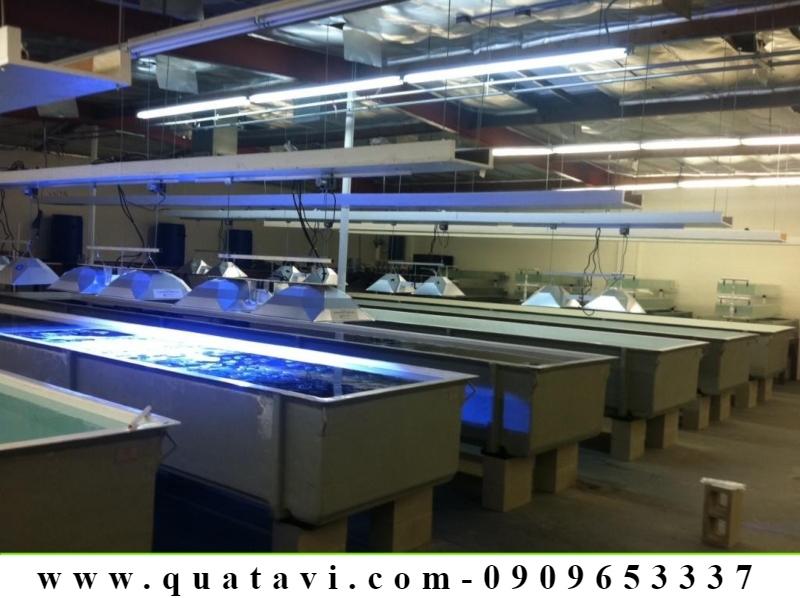 water tank1000m3 tankbest tank copper tankseptic tankcryogenic tank sintex tankhydrogen tankrain water tank China :
